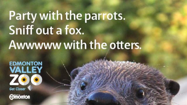 Edmonton Valley Zoo image 1
