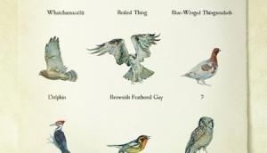 Birds_web