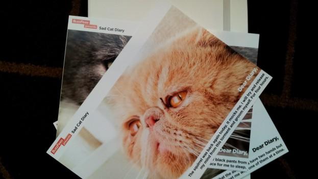 Sad kitten diary