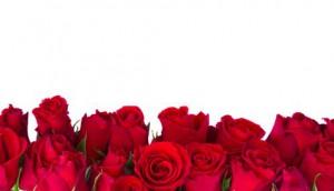 rosesShutterstock